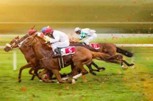 سایت شرط بندی اسب سواری